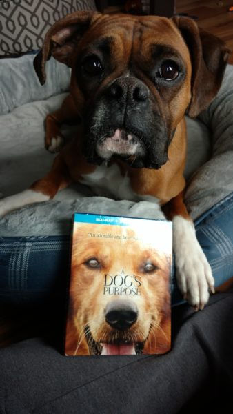 A Dog's Purpose Review and Giveaway